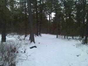 batsto winter 5
