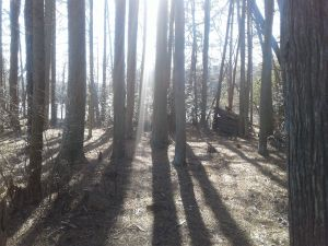 long shadows in woods